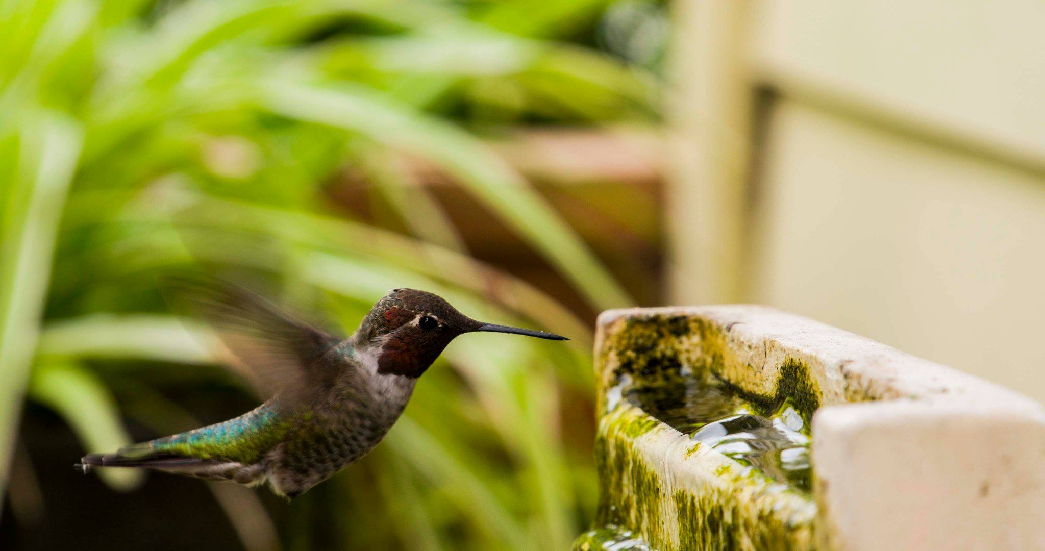 Watch: Hummingbirds in Super Slow-Mo in Beautiful Northern California