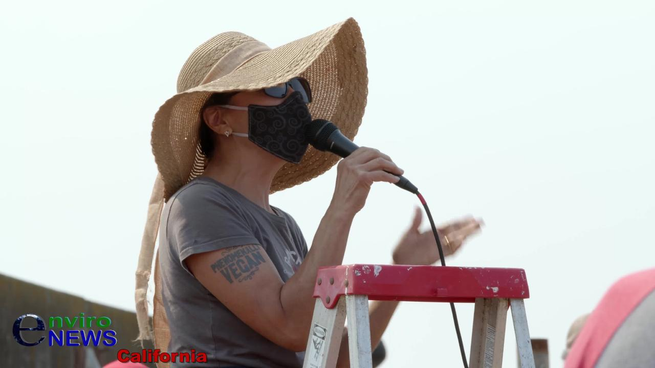 Vegan Celebrity Chef Miyoko Schinner at Tule Elk Protest: 'I Have 3X the Amount of Employees as All the Dairies Here… I'm Not Getting a Handout!'