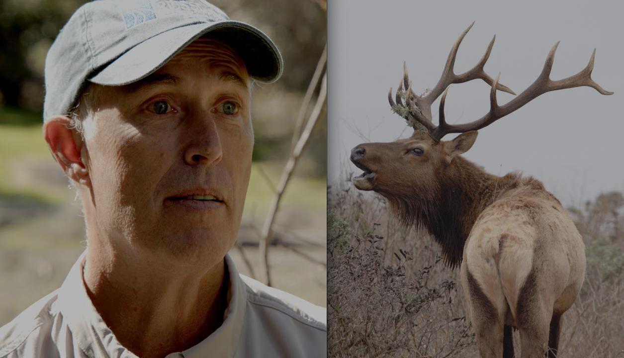 Rep. Jared Huffman Explains His Position Top-to-Bottom in the Battle to Manage CA's Rare Tule Elk (EnviroNews in-Depth Exclusive)