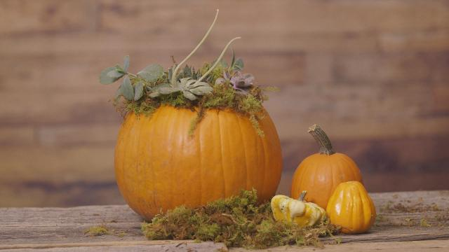 10 of the best pumpkin patches in Ontario