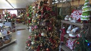 JW's Nursery & Landscaping Christmas trees
