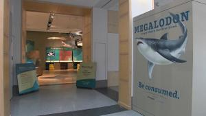 Sam Noble Oklahoma Museum of Natural History's: Megalodon Exhibit