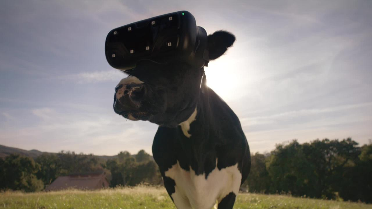 Chick-fil-A's First Work From McCann NY Shows Cows Know VR