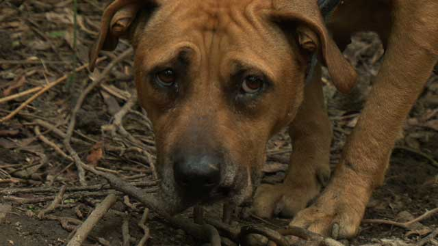 Pollocksville, North Carolina Dogfighting Raid B-roll