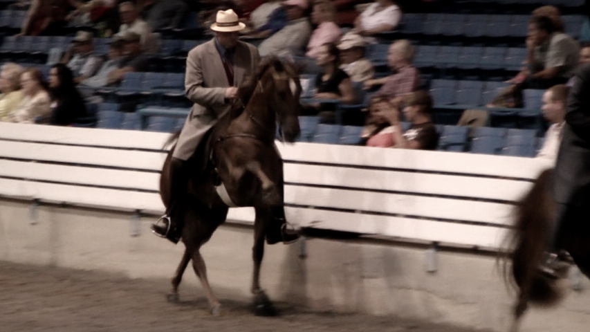 Tennessee Walking Horse investigation Broll