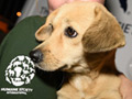 26 Dogs from Korean Meat Farm Arrive in Washington D.C.