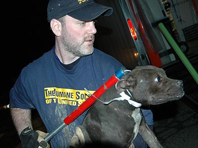 Ohio Dogfighting Raid B-roll