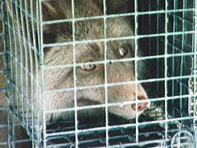 Fur Farm Video Clips