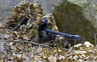 US Navy SEAL Snipers