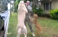Dogs Welcome Home Their Troops