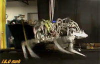 Cheetah Robot Sets Speed Record