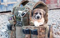 Soldiers and Their Battle Buddies