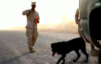 Camp Leatherneck Working Dogs
