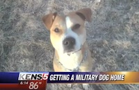 Retired Military Dog is Stranded