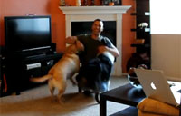 Dogs Freak When Marine Returns