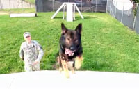 Army K9 Adoption, Its a Dogs Life