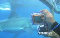 Wounded Brit Goes Shark Diving