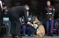 Military Dog Honored for Courage