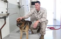 Dogs in the US. Marine Corps