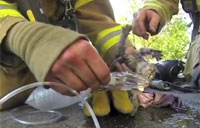Firefighter Saves 'Lucky' the Kitten