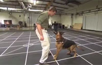 Meet Canine Star of New 'Call of Duty'