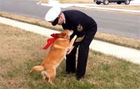 Dogs Welcome Home Their Troops Pt. 2