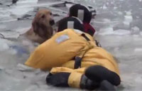 Firefighters Rescue Family Dog