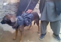 Taliban Claims to Capture US Military Dog