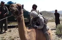 Camels are a Soldier's Worst Enemy