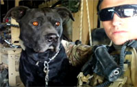 War Dog Shows Heart, Gets Heart Care