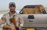 Iraqi Soldiers Stop a Lion at Checkpoint