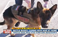 'Battle Buddy' Dogs Help Vets with PTSD