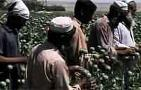 Two Minute Brief: Afghanistan's Opium Trade