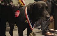 K-9 Medal of Courage
