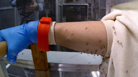Ouch! Inside an Insect Repellent Test Lab