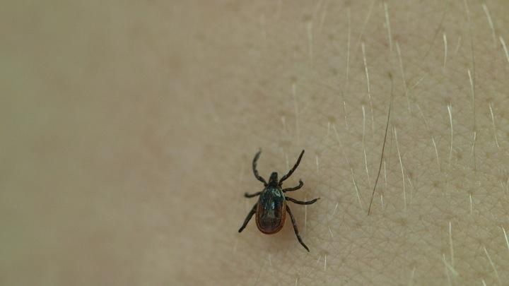 Tick Danger in Autumn