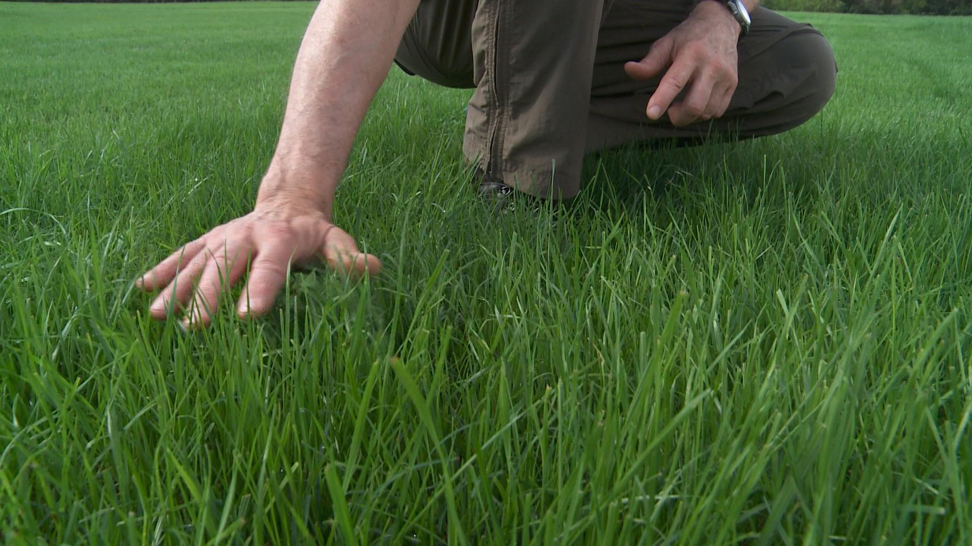 Don T Bother Fertilizing Your Lawn Twice A Year Consumer Reports