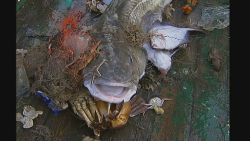 Eu Proposals Say Fishermen Must Land Everything Channel 4 News