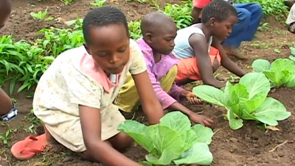Four lessons for transforming African agriculture   McKinsey