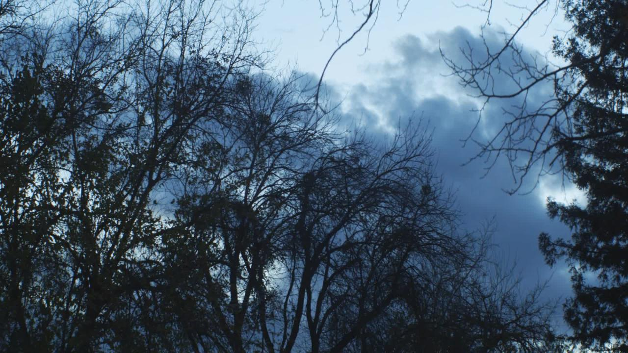 Timelapse Trees Windy Clouds 2