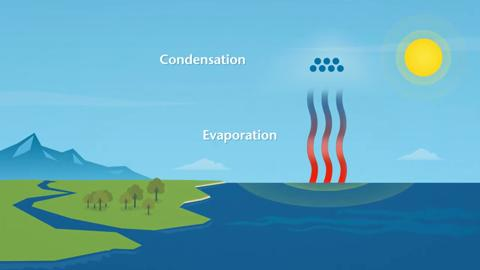 How does rain form? What is the water cycle?   This animated video explains how rain forms and explains how rainfall,  evaporation and condensation all form part of the water cycle.