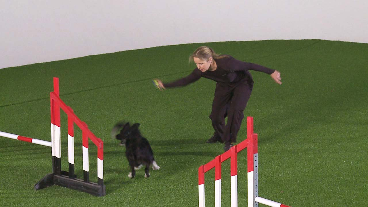 Lap Turn [video] - OneMind Dogs
