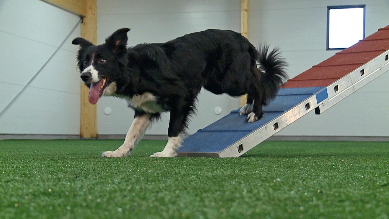 2on2off Contacts - Basic Training [video] - OneMind Dogs