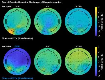 Transduction of the Geomagnetic Field as Evidenced from