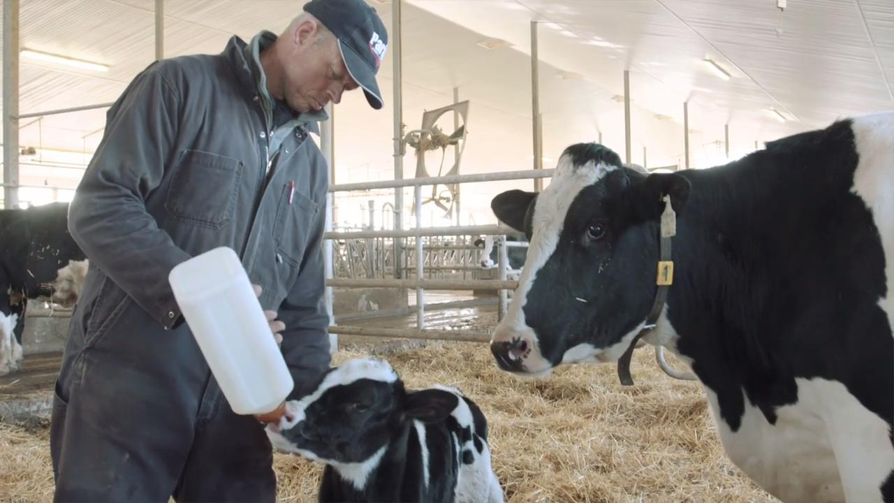 Dairy Cattle | Cargill
