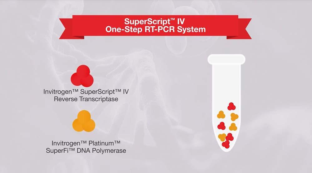Reverse Transcription Applications | Thermo Fisher