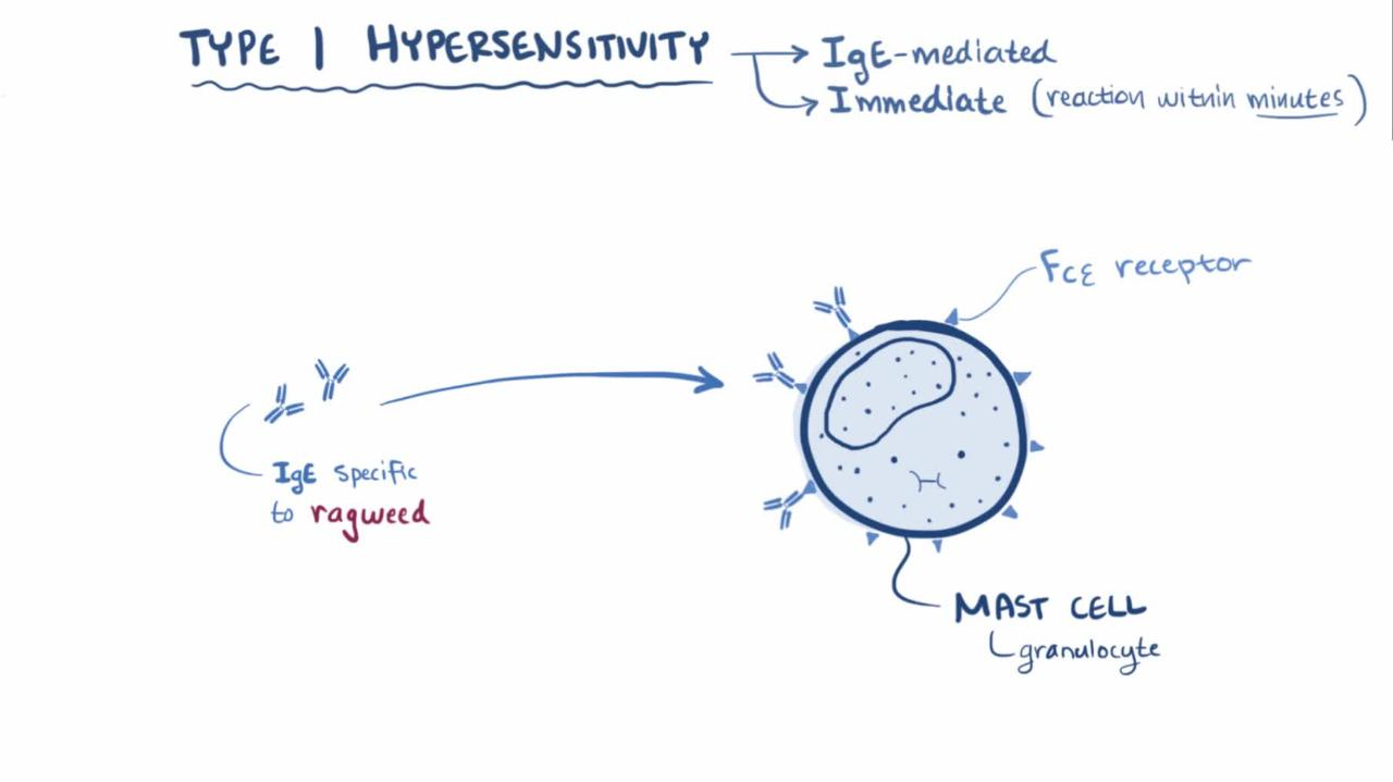 Overview of Type I Hypersensitivity