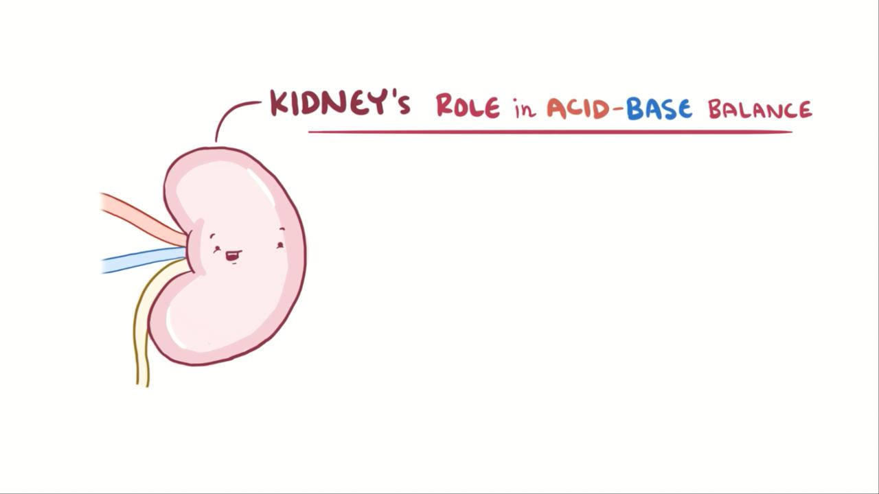 Overview of the Role of the Kidneys in Acid-Base Balance
