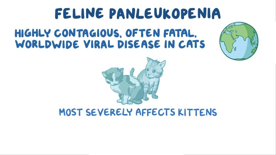Overview of Feline Panleukopenia - Generalized Conditions