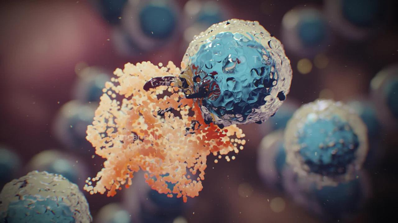 Immune Cells and T Cells